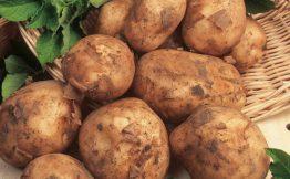 Seed Potatoes - Maris Bard