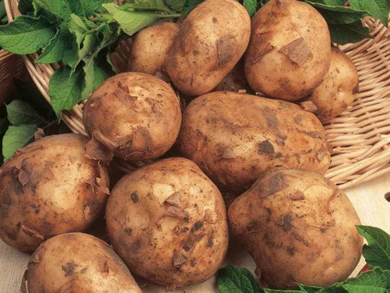 The best new potatoes to grow at home