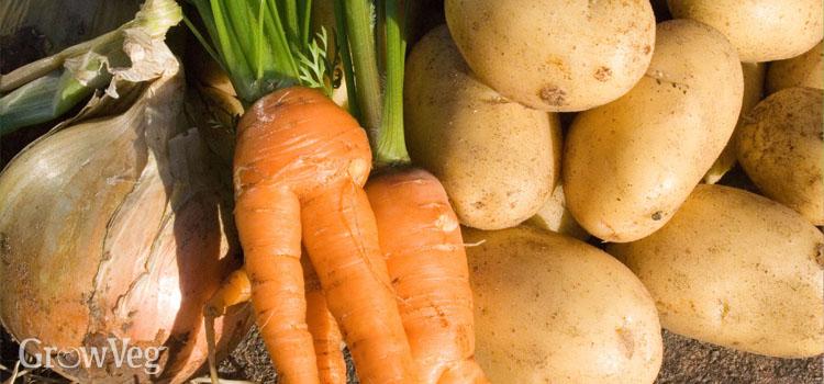 Storing & Preserving Homegrown Vegetables.