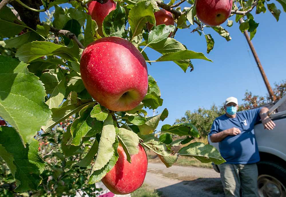 Apple opportunities | Good Fruit Grower